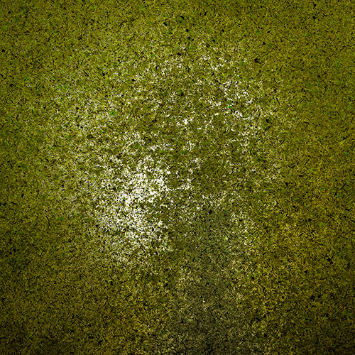 ppic2 Decor surface on a roll - Moss light green