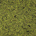 ppic1 Decor surface on a roll - Moss light green